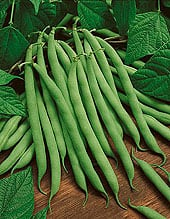 bush-beansfinal