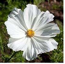 high-heat-flowers