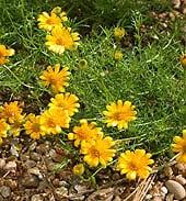 high-heat-flowers11
