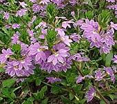 high-heat-flowers13