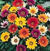 high-heat-flowers14