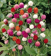 high-heat-flowers15
