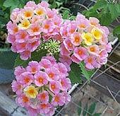 high-heat-flowers17