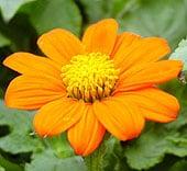 high-heat-flowers19