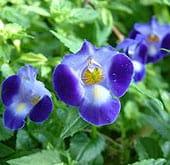 high-heat-flowers28