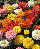 high-heat-flowers29