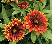 high-heat-flowers3