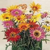 high-heat-flowers4