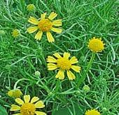 high-heat-flowers5