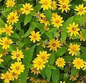 high-heat-flowers7