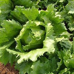 lettucelg
