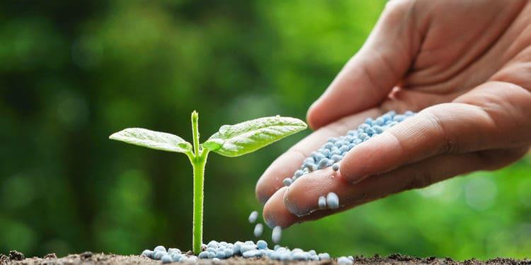 The Best Garden Fertilizers Including Best Liquid Fertilizers and