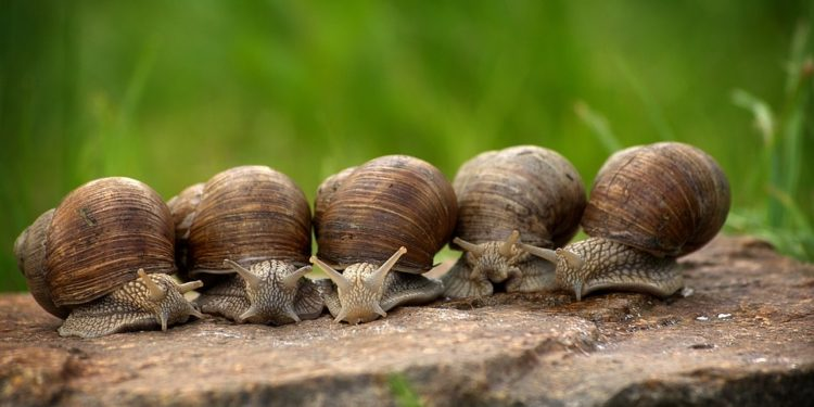 How to Kill Snails and Slugs - The Definitive Guide
