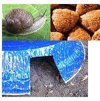 snails-slugs8