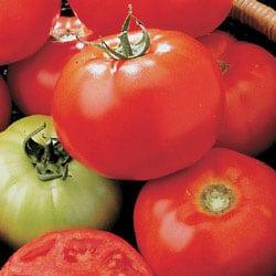 Growing Tomatoes & Tomato Growing Tips - Weekend Gardener