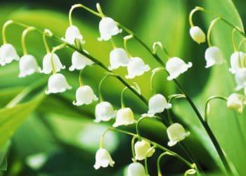 High Heat Flowers for Hot Summer Areas - Weekend Gardener