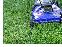 Effective Lawn Mowing Tips and Techniques - Weekend Gardener