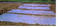 soil-solarization