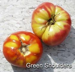 tomato-greenshoulder