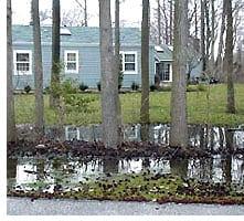 trees-wetsoil1