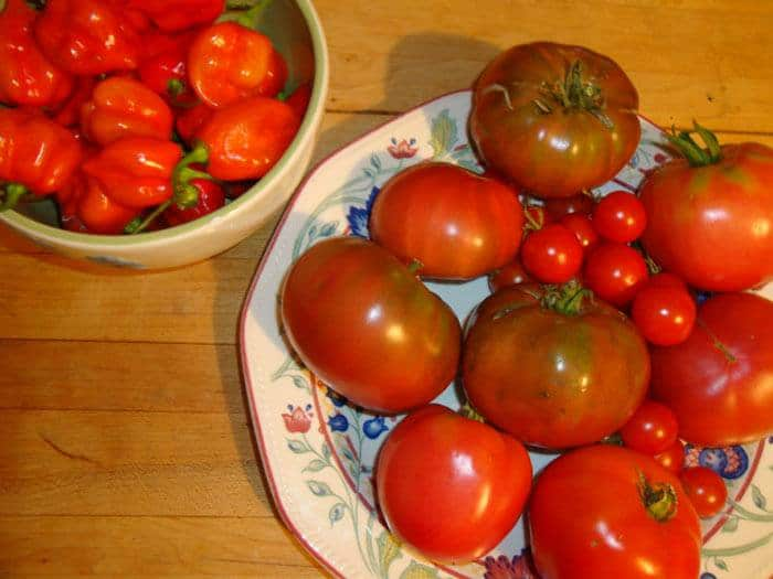 25-Common-Tomato-Plant-Problems-And-How-To-Fix-Them-Green-Shoulder