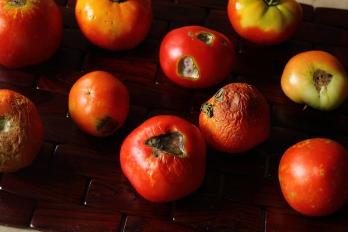 25-Common-Tomato-Plant-Problems-And-How-To-Fix-Them-Sunscald