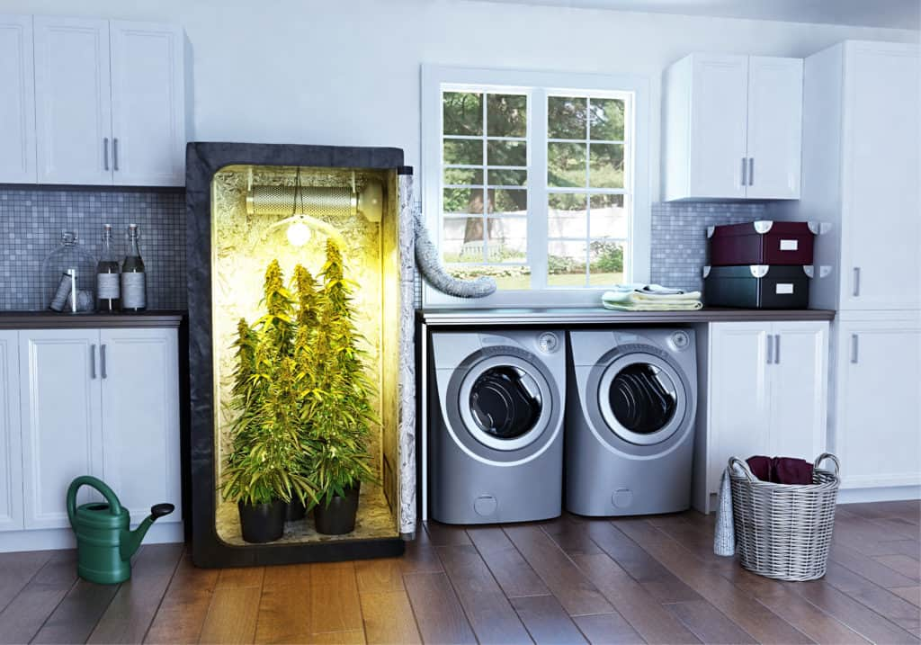 Best Marijuana Grow Boxes & Grow Cabinet