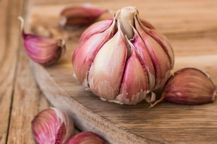 How-To-Grow-Garlic-Indoor-hardneck-varieties-garlic