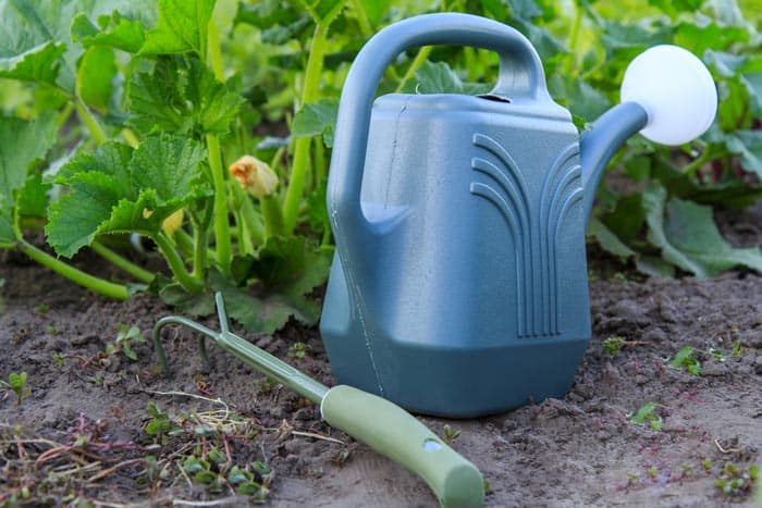 How-To-Grow-Zucchini-on-A-Trellis-Watering