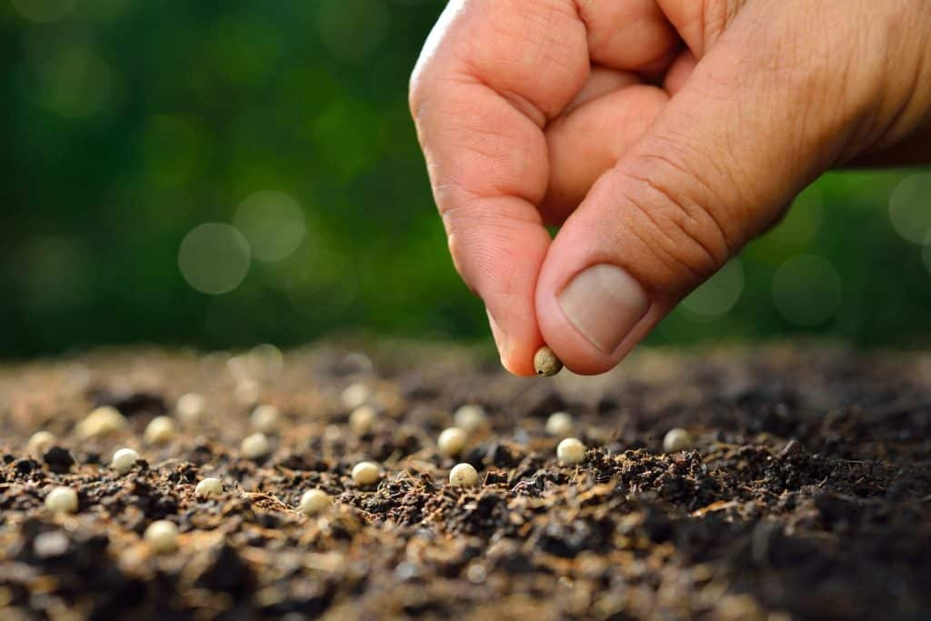 Best Online Seed Banks That Ship To USA