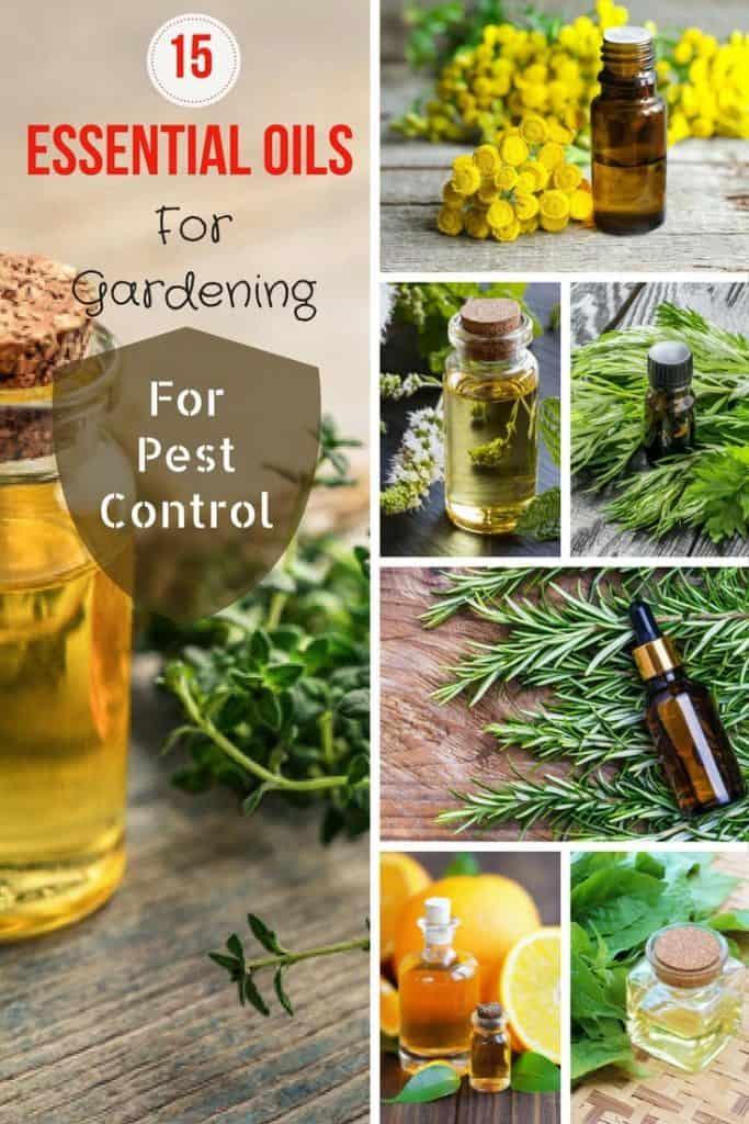 15-Essential-Oils-For-Gardening-For-Pest-Control-1