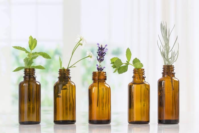 15-Essential-Oils-For-Gardening-For-Pest-Control-Oil-Affect-The-Bug