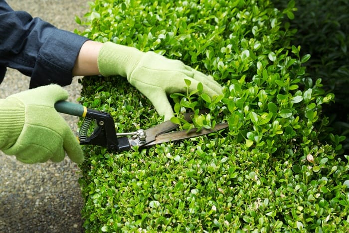 What To Look For When Buying Hedge Shears?