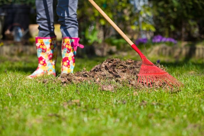 How-To-Get-Rid-Of-Little-White-Bugs-In-Soil-Clean-Garden