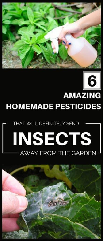 Natural-Pesticides-For-Your-Garden-You-Just-Have-To-Try-10