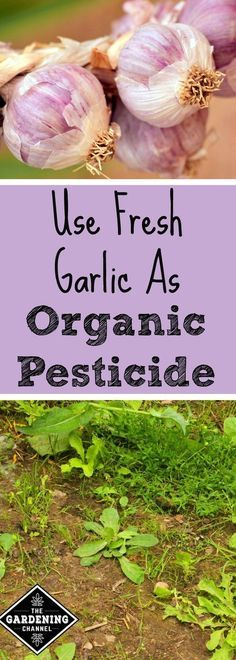 Natural-Pesticides-For-Your-Garden-You-Just-Have-To-Try-5