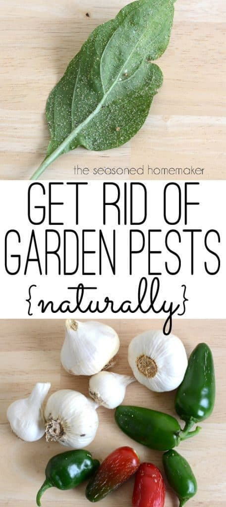Natural-Pesticides-For-Your-Garden-You-Just-Have-To-Try-7