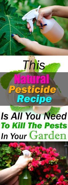 Natural-Pesticides-For-Your-Garden-You-Just-Have-To-Try-8