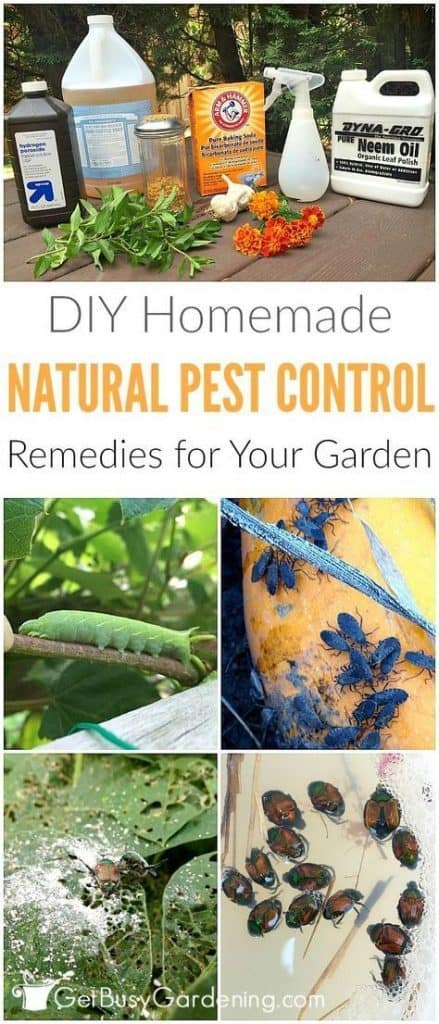 Natural-Pesticides-For-Your-Garden-You-Just-Have-To-Try-9-439x1024