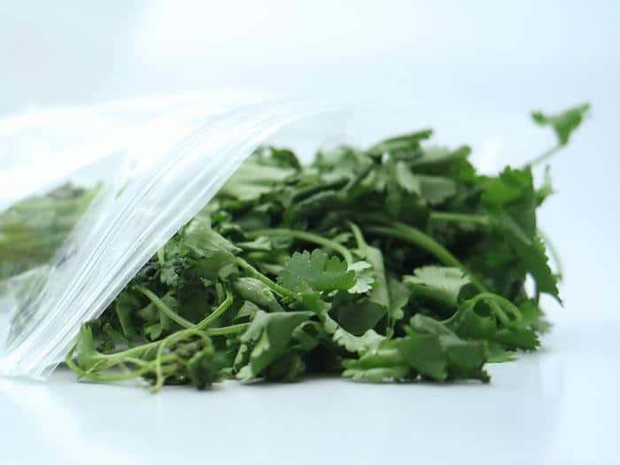 how-to-harvest-cilantro-preserve