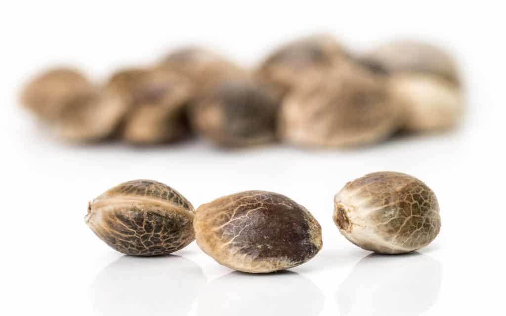 Germinate Weed Seeds
