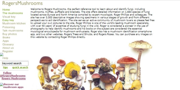 The History of Roger's Mushrooms and What Happened To It